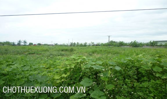 Land for lease in Thanh Liet, Thanh Tri, Ha Noi