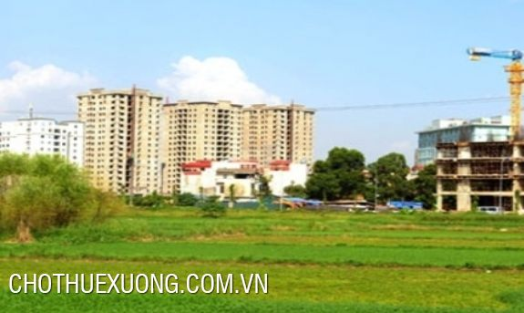 10000sqm land for lease in Nguyen Khe, Dong Anh, Ha Noi