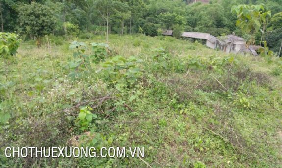 Forest land for sale in Hoa Binh at the best price